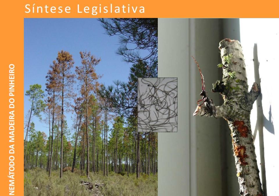 Síntese Legislativa NMP